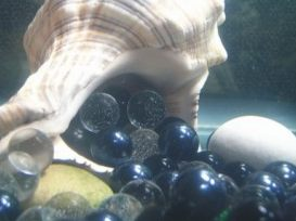 Марбсл для декора аквариумов