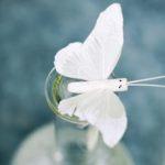 Как избавиться от моли и ее личинок навсегда