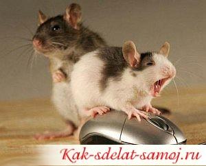 Свойства мыши о которых я не знала